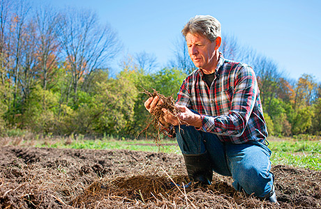 Unlocking the secrets in soil