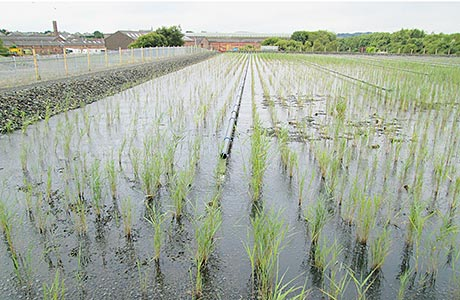 Aerated wetland investment in Fife