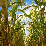 crops_biogas_thumb