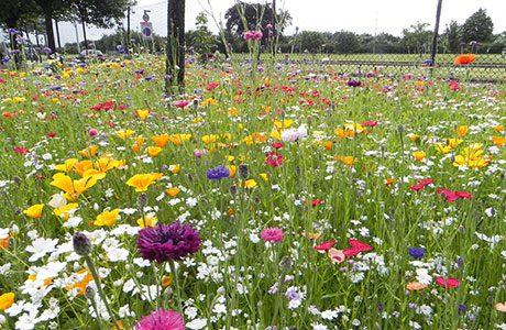 Wildflowers at Heathrow.