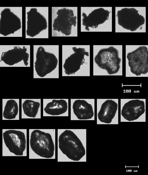 Figure 1. (FlowCam image) Some typical wastewater grit shapes with accumulated fats and organics, and some typical silica sand particles (even these are not uniform and round.)