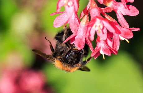 Neonicotinoid insecticides linked to wild bee decline across England says new study