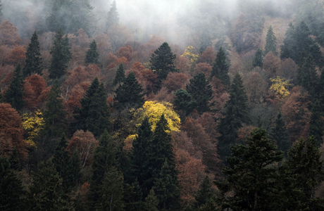 Big data study confirms forest biodiversity as a key factor for forest yields