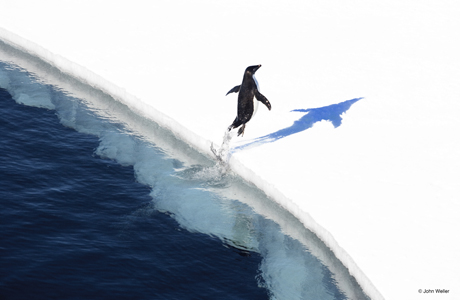 World's largest marine protected area declared in the Antarctic