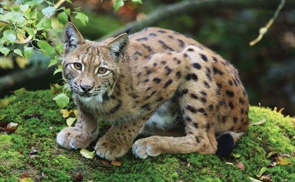 Report highlights global wildlife crisis