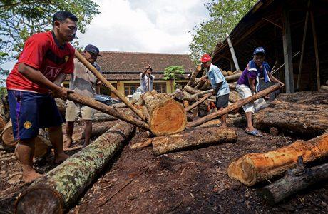 EU-Indonesia deal to curb illegal logging
