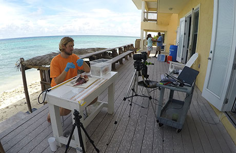 ReefsGoLive initiative offers virtual tours of reefs of Little Cayman