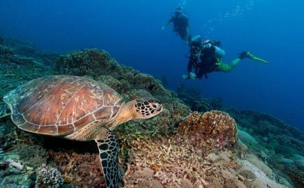 Smartphone app lets divers record levels of marine debris