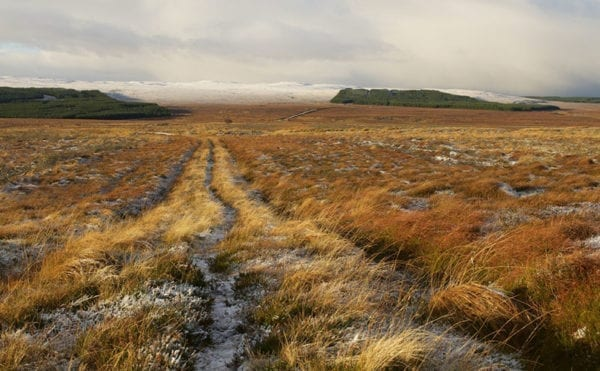 UK's damaged peatlands win new support to tackle climate change