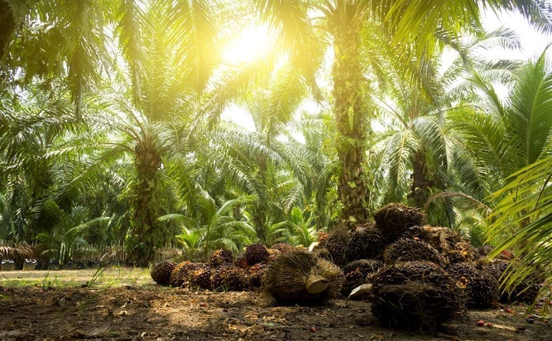 Supermarket's move to ban palm oil products: understandable but possibly misguided