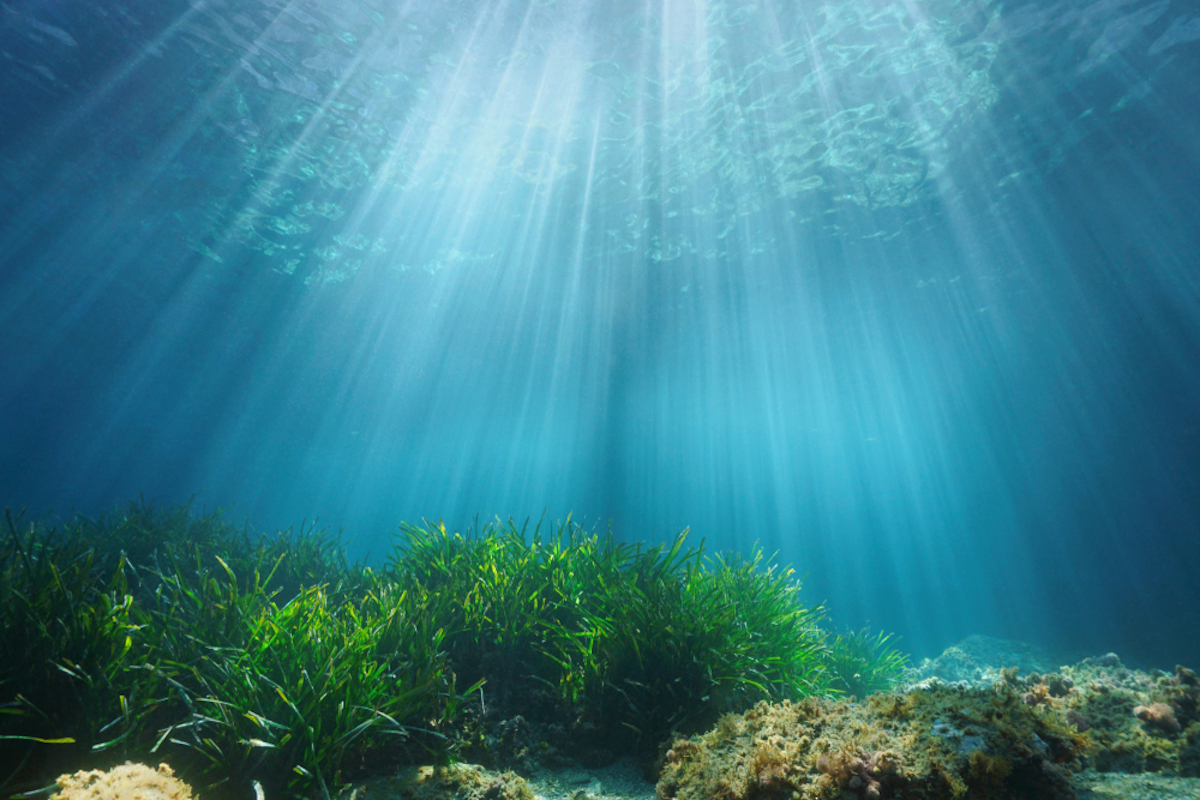 ocean-seagrass