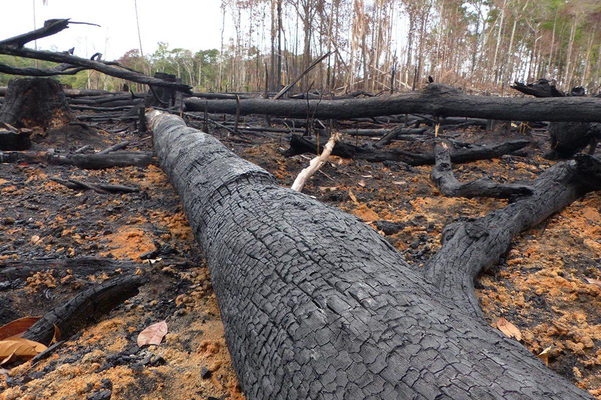 Amazon deforested area