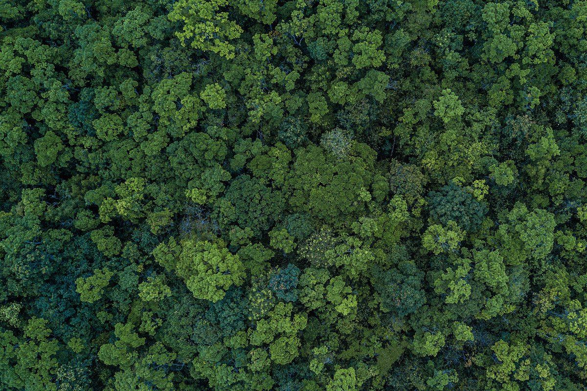 Amazon aerial view