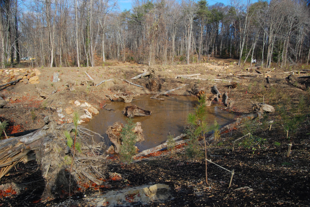 Forested-restoration-project