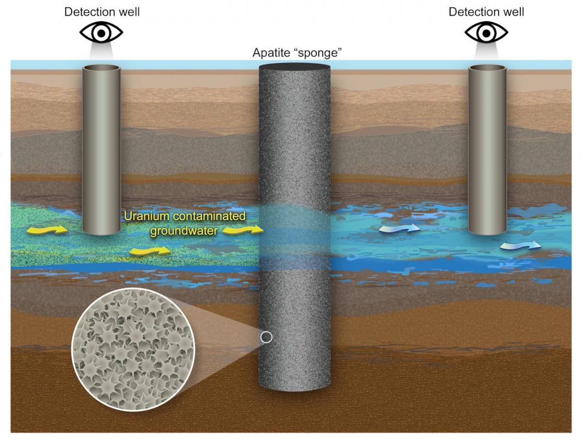 apatite-sponge-for-uranium