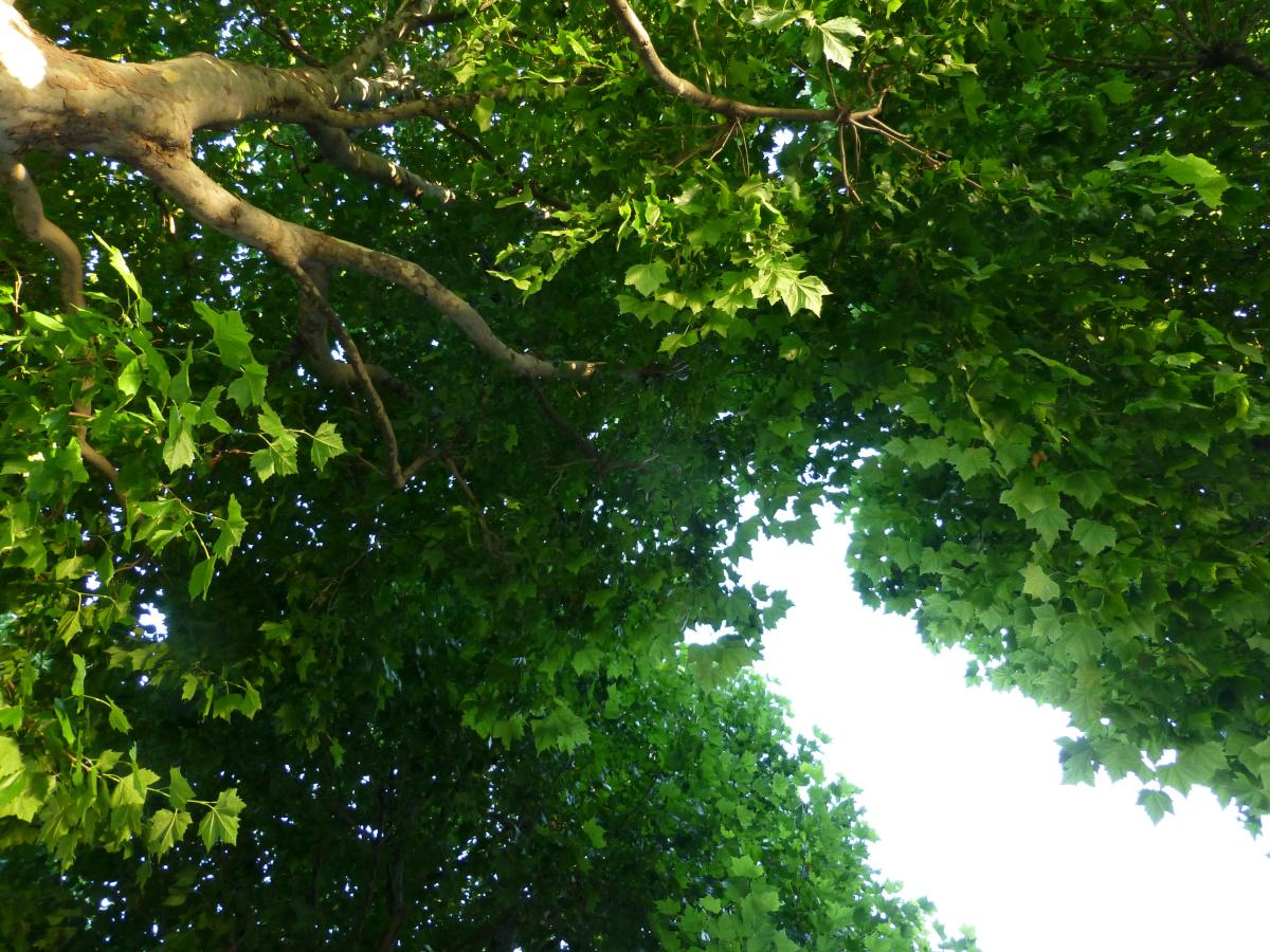 tree-canopy-UK