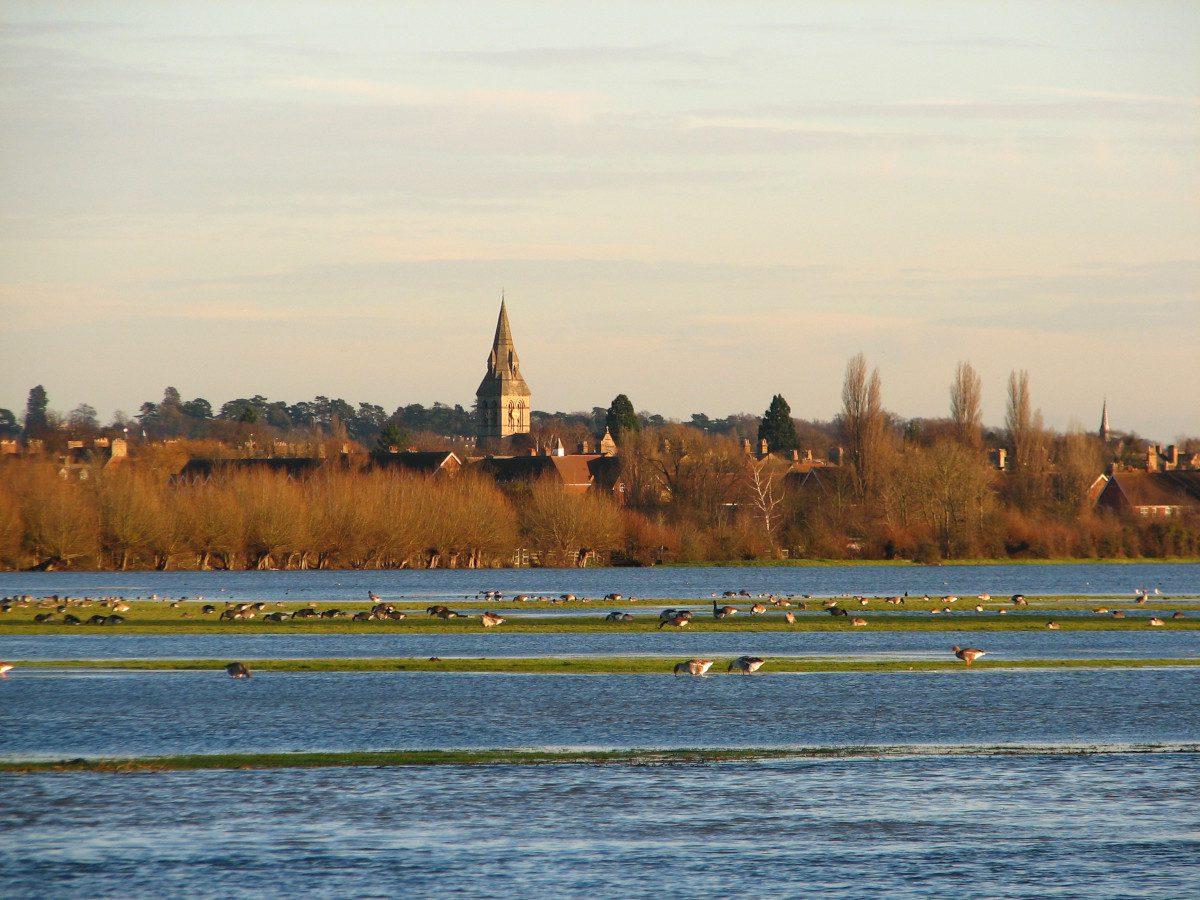 Port-Meadow-geese